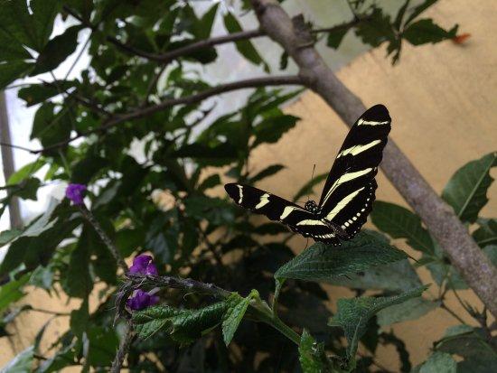 Atitlan Nature Reserve: photo2.jpg