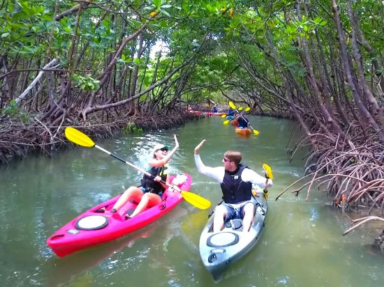 Isla Marco, FL: Kayaking through Mangroves on Marco Island, Paddle Marco.