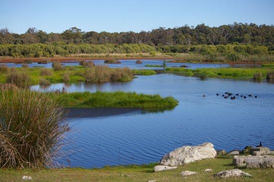 Янчеп, Австралия: Wetlands walk