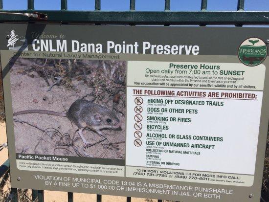 Dana Point, Kalifornia: photo2.jpg