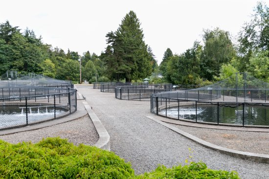 Fish hatchery - Picture of Columbia Springs, Vancouver