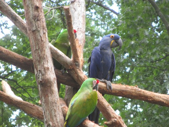 Thurmont, MD: Macaws