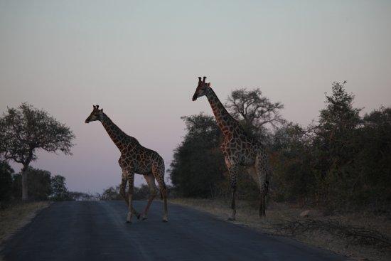Klaserie Private Game Reserve照片