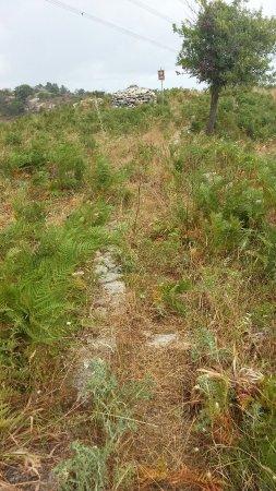 Montalbano Elicona, Italia: Tholos: il percorso che porta al bellissimo tholos è praticamente impraticabile a causa di sterp
