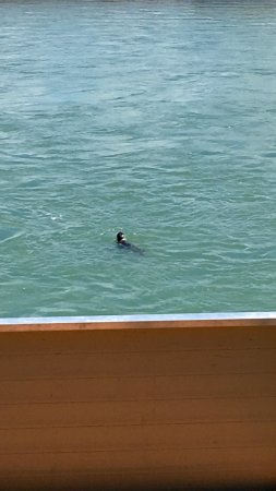 Riddle's Fishing Lodge: Seal from the deck.