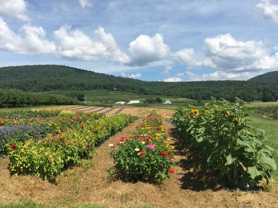 Thurmont, MD: Flowers in bloom in July