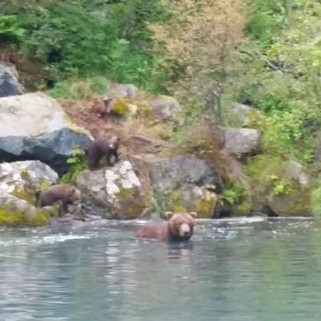 Soldotna, Αλάσκα: We saw 10 different bears that day