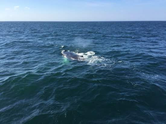 Cape Ann Whale Watch: Whale watching in September