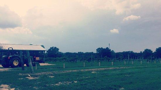Albertville, AL: photo5.jpg