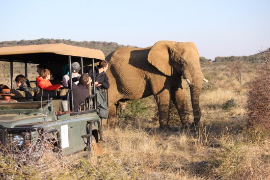 Mosetlha Bush Camp & Eco Lodge: A close encounter with an elephant