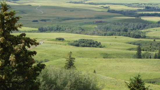 Cypress Hills Interprovincial Park From The Highest Point In Saskatchewan