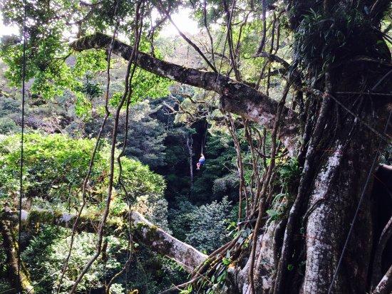The Original Canopy Tour : photo2.jpg