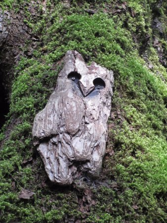 Nanaimo, Canada: Cable Bay trail owl