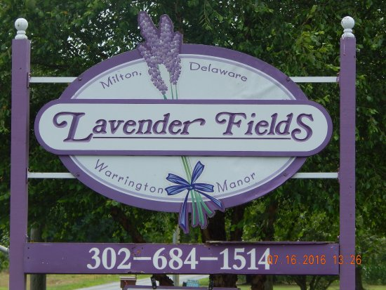 Lavender Fields Farm