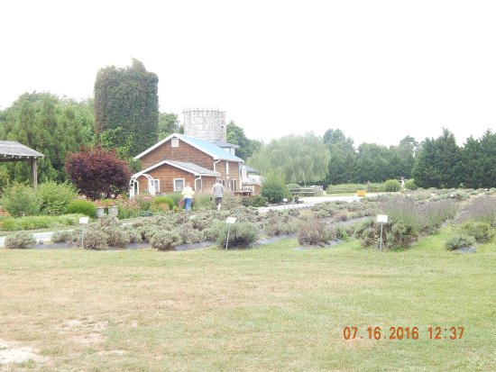 Lavender Fields Farm: photo1.jpg