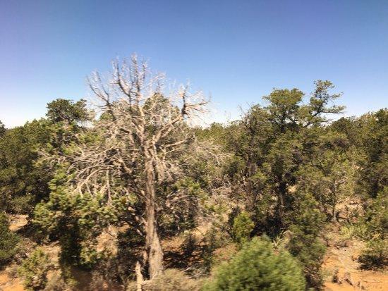 Williams, AZ: photo3.jpg
