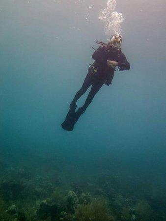 Utila, ฮอนดูรัส: Captain Morgan's Dive Centre