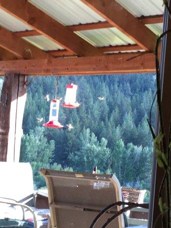 Hamilton, Montana: Horses, hummingbirds, great view, great service and food