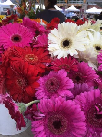 Puyallup, Вашингтон: Fresh flowers at Saturday's Farmer's Market