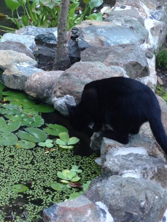 Tillett Gardens: Cat at Tillet Gardens