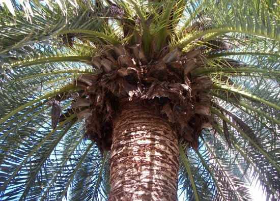Cathedral of St John the Evangelist: A sheltering palm near the Cathedral's entrance