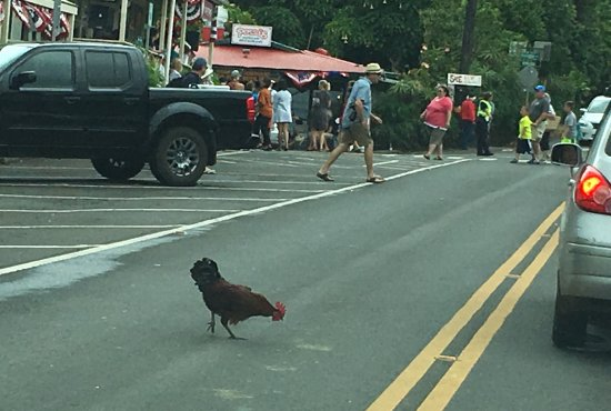 Makawao, HI: Why did the rooster cross the road?