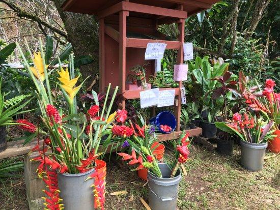 Makawao, Havaí: Roadside Nursery - Honor System