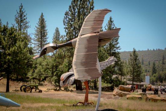 Cassel, CA: Goose
