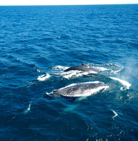 Redcliffe, Australien: Pair of whales