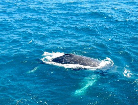 Redcliffe, Avustralya: Whale