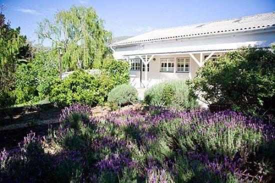 Villa Coloniale: Garden