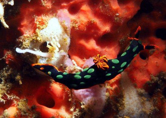 Pantai Lovina, Indonesia: photo4.jpg