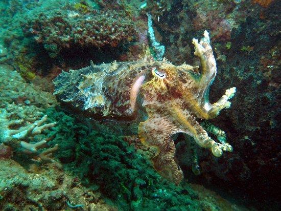Pantai Lovina, Indonesia: photo5.jpg