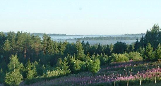 Ilomantsi, Finlandia: Aamu-usvan aikaan kuvattu näkymä huoneemme ikkunasta.