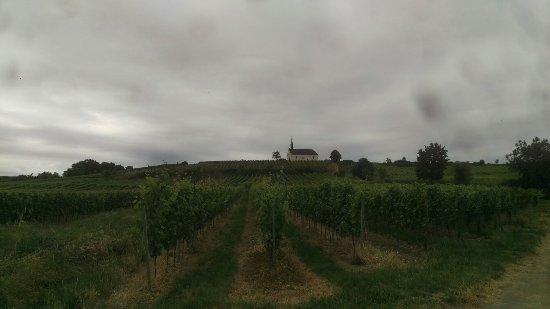 Weingut Klosterhof Loesch