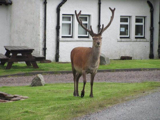 Kings House Hotel: Our greeting