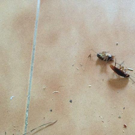 La Eliana, Hiszpania: De kakkerlakken die ik na de eerste dag heb opgeveegd!