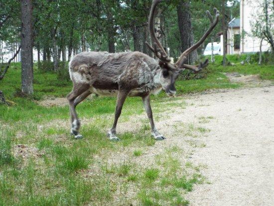 Lapland Hotel Riekonlinna: hoe mooi kan je uitzicht zijn