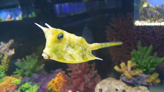 Anapa, Russia: Рыба-коровка