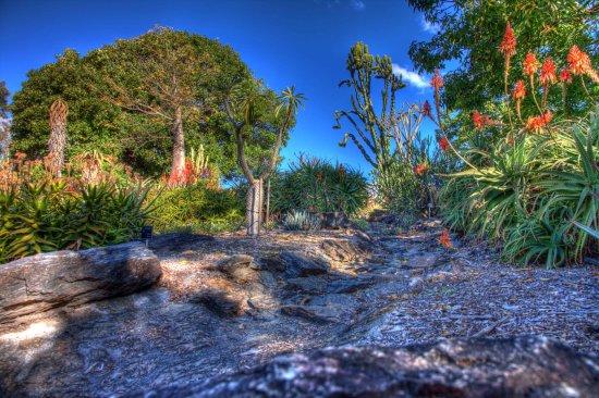Brisbane Botanic Gardens Mt Coot Tha