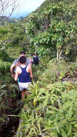 Pa's Treks Day Tours: Gjennom regnskogen