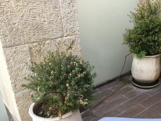 Olive Tree Hotel: La terraza de mi habitación