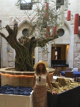 Olive Tree Hotel: En el lobby también a veces comedor está el retoño de un árbol de Olivo de hace 3000 años atras