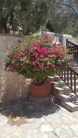 Monasterio de Ayios Neophytos: Relaxing in the shade