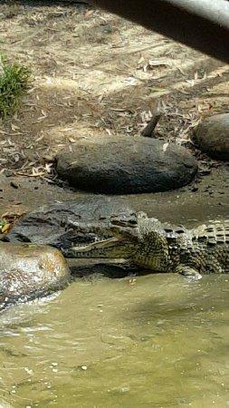 Palm Cove, Australia: Snapchat-6318507602487352370_large.jpg
