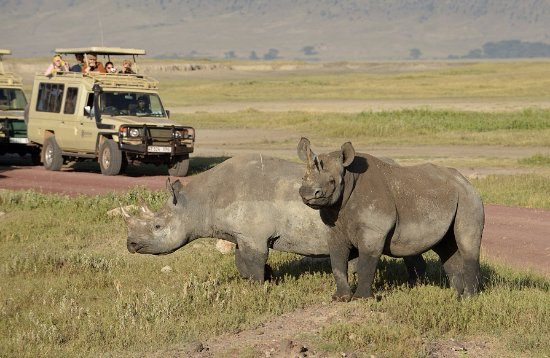 Arusha Region, Tanzania: Ngorongoro crater with its best wildlife experience