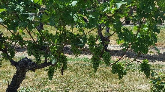 Grape Escape Wine Tours: 20160716_134648_large.jpg