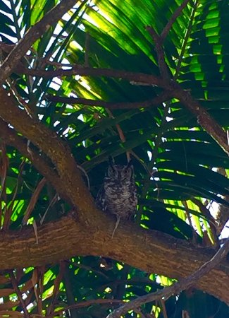 Armadale Boutique Lodge: Our resident owls!