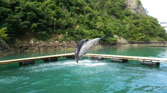 Taiji-cho, Japón: DSC_1828_large.jpg
