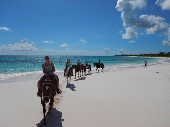 Oceanview Farm: French Leave Horseback